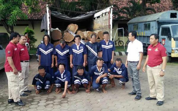 10 Pelaku Illegal Logging Berhasil Dibekuk Polres Pemalang